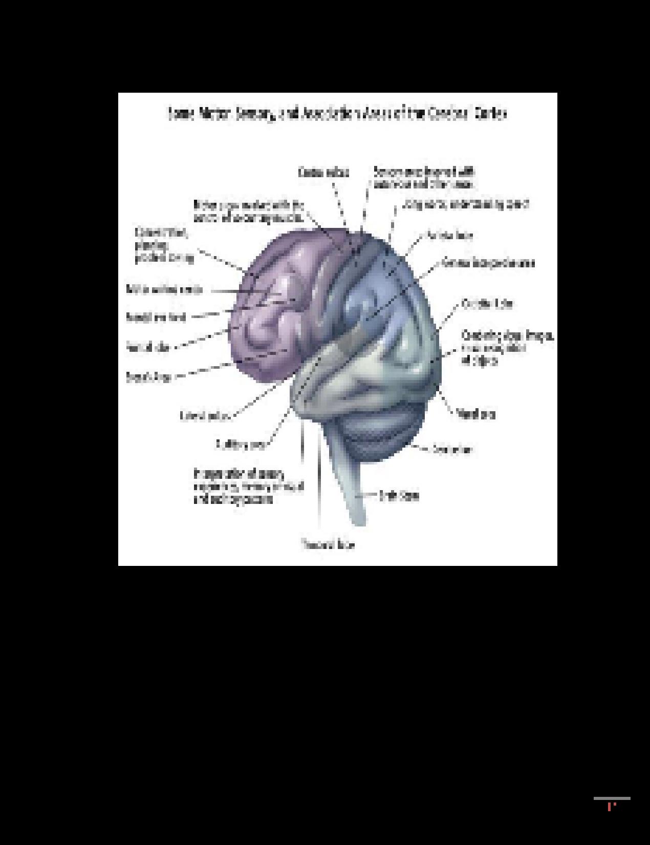 SOLUTION: Cerebrovascular Accident - Studypool