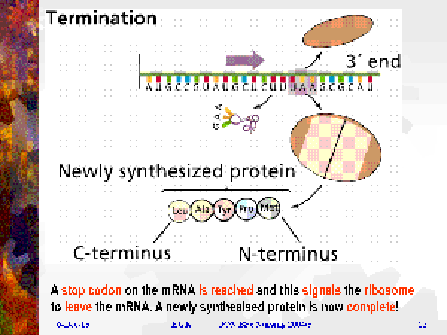 protein biosynthesis Protein biosynthesis (synthesis) is the process in which cells build proteinsthe term is sometimes used to refer only to protein translation but more often it refers to a multi-step process, beginning with amino acid synthesis and transcription which are then used for translation.