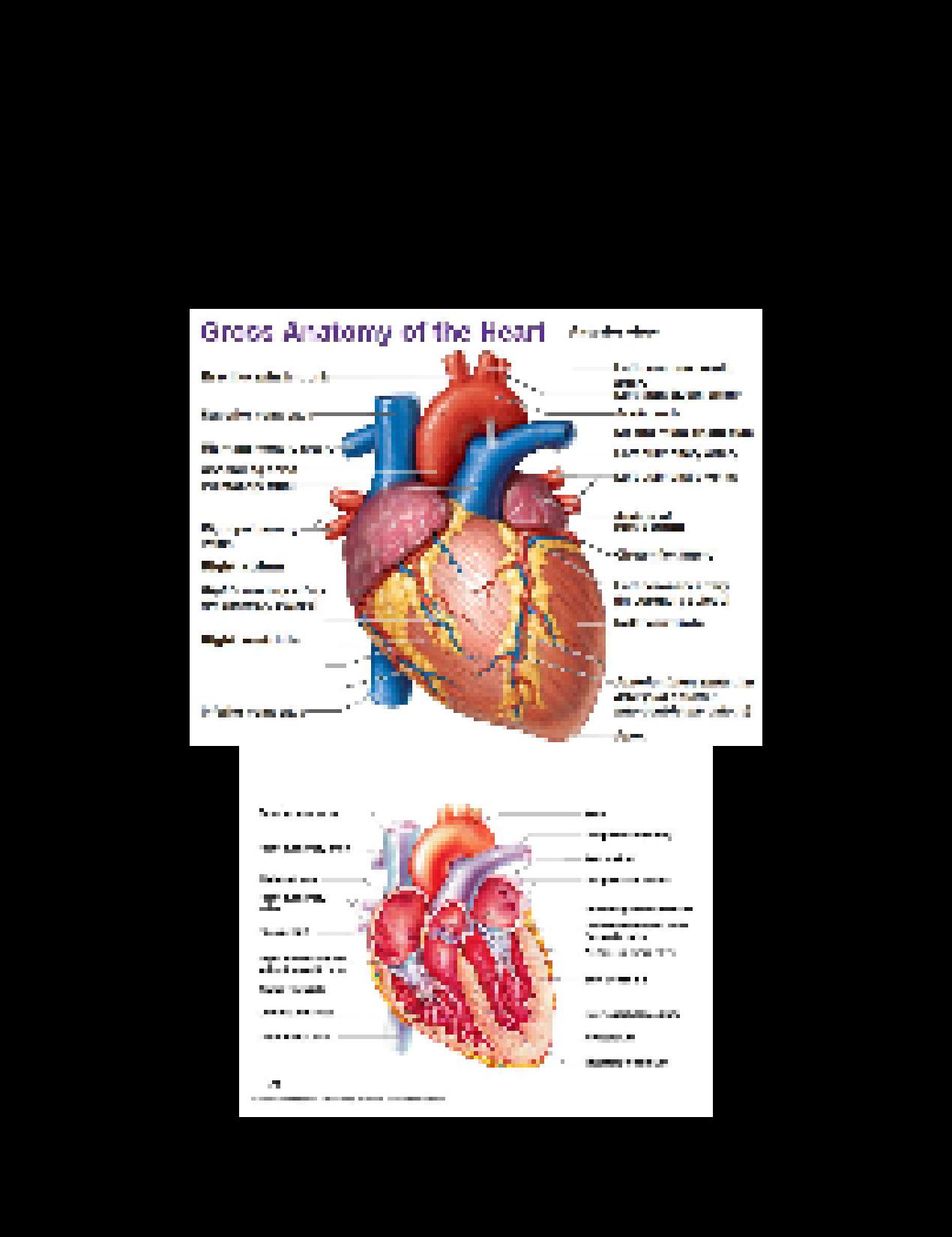 SOLUTION: Human Anatomy Final Exam Study Guide #2 - Studypool