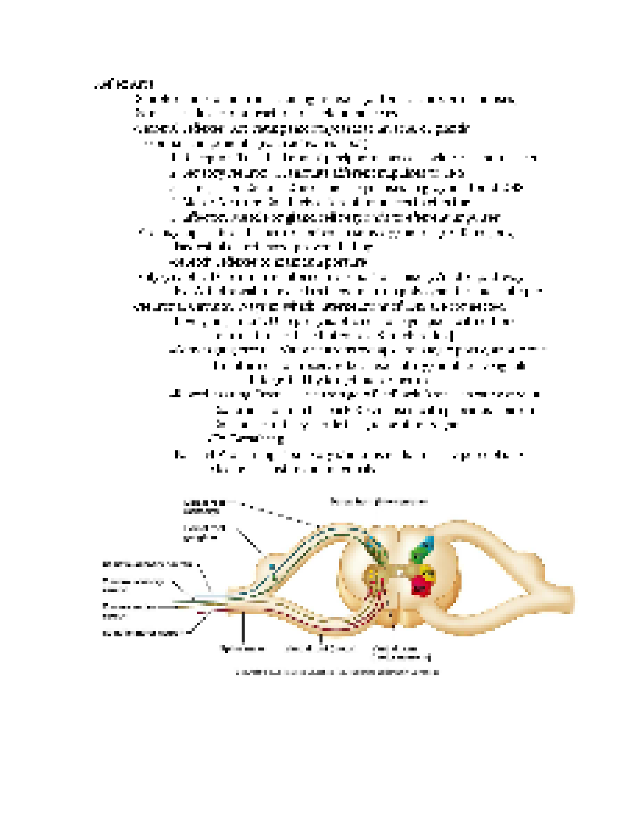 Anatomy study guide