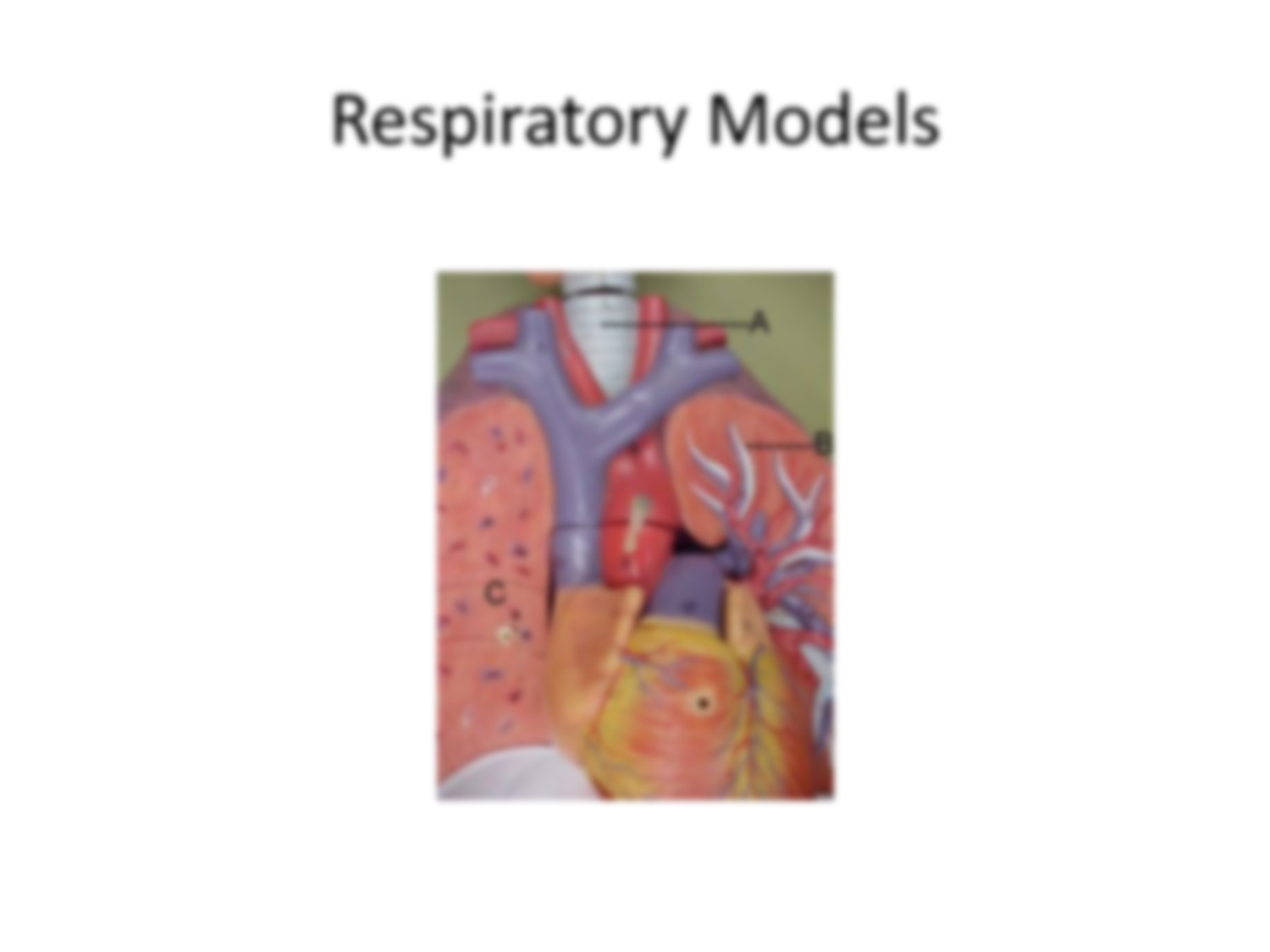 Solution respiratory and digestive system diagrams studypool respiratory and digestive system diagrams pooptronica Image collections